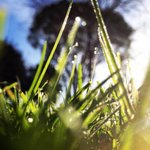 Got this from the @calpoly Instagram this morning. Dew on campus after a chilly night! http://t.co/S9KFqYuXIJ