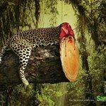 Quando a mata se vai, a vida selvagem tambem vai http://t.co/k5RdtCfNzk