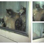 AHS: #Phoenix apartment overrun with dozens of cats http://t.co/85ix8WKmaR #abc15 http://t.co/S1KrDnqYXR