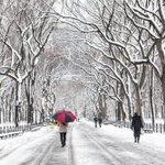 Así luce Central Park en Invierno... ¿Ya tienes tu boleto? #Promo #nuevayork #Viajero http://t.co/dg5wQlyJjP