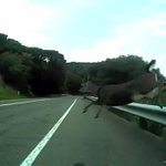DRAMATIC VIDEO: Bike rider crashes into a deer at full speed with his bike-cam rolling --> http://t.co/YbBCV7vqDm http://t.co/mmlUZzgX9q