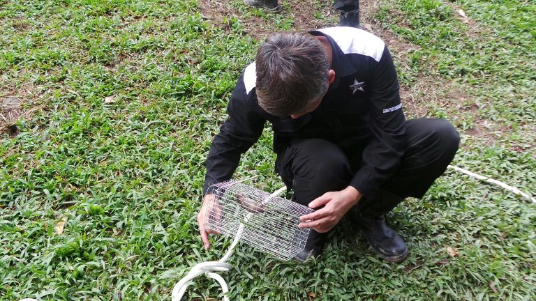 Bukit batok rat infestation pest controllers sent by singapore hdb seen trapping rats today - Trappen rots ...