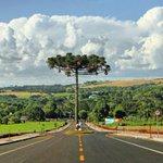 Rua tem desvio para árvore ameaçada de extinção no interior do PR http://t.co/vMNDjLjfOe #G1 http://t.co/9rVbhH8bhq