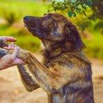 Nav jāpērk simtiem eiro vērtu dzīvnieku, lai būtu cilvēks! Nepērc! Adoptē. Viņi būs pateicīgi https://t.co/x5GwjrBIzY http://t.co/kYjXlFazQ6
