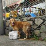 VIDEO: Un perro duró un día atado y abandonado cerca a la Galería #Manizales http://t.co/0tz6uZv65K vía @lapatriacom http://t.co/ttcHAOYWQH
