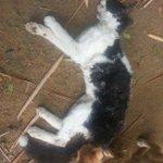 Denuncian nuevo acto de crueldad contra gatos en #Bucaramanga http://t.co/S3ZfRg5FK1 http://t.co/hZCtq20CoG