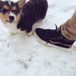 @VANS_66 I purposely matched my MTE Sk8-His to my dog. People do that, right?! http://t.co/0ves3VJwDF