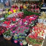 @WatfordJFlowers Loving the array of #Christmas flowers this week @WatfordMarket #shoplocal  #Watford http://t.co/WrassFkJXd