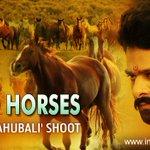 Thousand horses for #Baahubali shoot   read here - http://t.co/h4IrDhltWW  #Prabhas #Anushka #Rajamouli http://t.co/TP8Bil8ckp