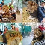 Zoo visitors cuddle up for LION SELFIES despite repeated health and safety warnings http://t.co/rOWdSOZAMC http://t.co/IHDtkh2ITO