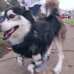 Cachorro volta a andar com patas feitas por impressora 3D: http://t.co/AMntvoINNB http://t.co/RpvjBFGJiC