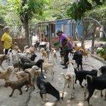 #Mascotas Se inicia recolección de 'tapitas' para los perros desamparados de #Bucaramanga http://t.co/2hTnUXA1Zf http://t.co/jw6gspXdEC