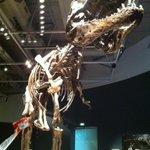 I got a @nzsecretsanta! But, I cant quite reach it! #tyrannosaurs #trexproblems http://t.co/RZOdBxpGdx
