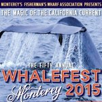 Celebrate #whales at Whalefest in #Monterey, Jan. 24-25. http://t.co/ouCw5w9GCG http://t.co/EGp5EL5O5P