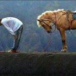 حصلت على أجمل صورة هذا الشهر ..  رجل إندونيسي يصلي وخلفه حصانه ينتظره ويقلده ..! http://t.co/0ir48eLutO