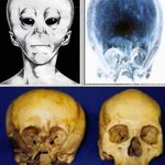 RT @UFOANEU: 900 year old #Alien Skull found to contain DNA not of this earth @StarchildPJT @SCWBooks http://t.co/XkUpKvKMxR
