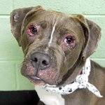MY FAMILY ABANDONED ME IN A VACATED HOUSE..PLS SAVE ME OR I DIE FORTESE 10MOS #NYC DEATHROW http://t.co/uoT1tQC7vM … http://t.co/gs7sN76zZG
