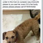 Pls kp looking for millie #leicestershirehour #riverwelland #turtlebridge LE15 #morcott http://t.co/QlhO4sYM08 http://t.co/uphayM2vy2