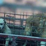 Matadouros de cães na China exportam pele para fazer luvas, sapatos e outras roupas de couro. http://t.co/CFil7bhudt http://t.co/TyWM8QO1ON