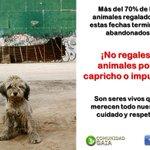 #QueLindoSeriaQueEnEl2015 no hubiera ningún #animal abandonado después de ser un regalo. #NoRegalesAnimales #Navidad http://t.co/rBvgO1Q44p