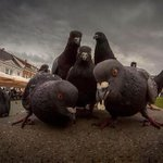 Why these pigeons look like about ot drop the most fire album of 2014 http://t.co/9m3OMSXfAX