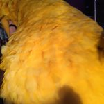 "From #Colbert Farewell ""my"" group @JeffDaniels, Sam Waterston, @CyndiLauper, Big Bird. Stuck behind BB in rehearsals http://t.co/i55effDXVT"