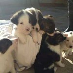 Poco a poco, quedan 6 cachorros. Adopta uno y dale una mejor vida que estar en un refugio. Ctto: @almas_inocentes http://t.co/PaUXcZp2bk