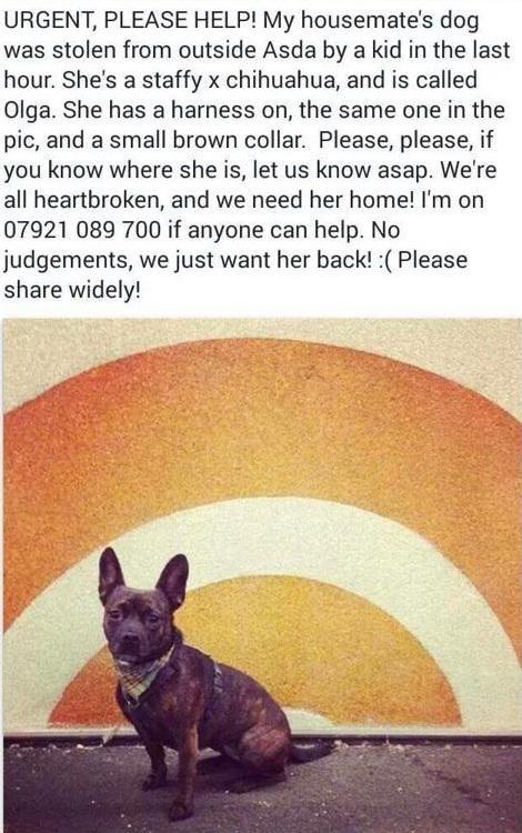 My housemate's dog Olga was stolen 18/12 6:30pm in Leyton, East London. I love this dog. Let me know if you see her. http://t.co/kOZs2j3msp
