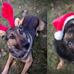 Happy and Safe holidays to our #4leggedfriends. Ready to serve PSD Parker and PSD Titan. #ruff #poltwt ^cc http://t.co/O9tRdESJ1Q
