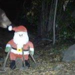 #rockford_il Bear attacks Santa Claus, ends up on… http://t.co/fbHLa4y644 http://t.co/YjizxJJTpB #rockfordlink http://t.co/CZFObwJIIo