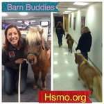 """GIFT IDEA: Sponsor a """"Barn Buddy"""" @hsmo Long Meadow Rescue Ranch for the holidays! @ShowMeStLouis @ksdknews http://t.co/ZB7sRTw8nZ"""
