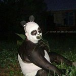 Panda kalah judi. RT @sodikuye: Bang @radityadika ini hewan apa: http://t.co/3AbIC0KL54