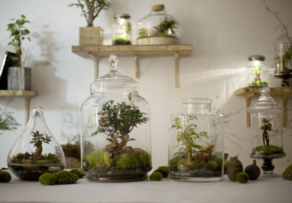 d co diy faire son terrarium mode d 39 emploi. Black Bedroom Furniture Sets. Home Design Ideas