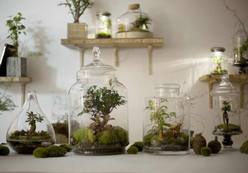 D co diy faire son terrarium mode d 39 emploi - Fabriquer son terrarium ...