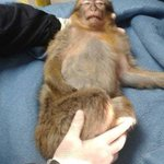Cops tasered a French #monkey who had been stealing chocolates from kids for over a week! http://t.co/BjCYoBRvIi http://t.co/WHbNg8ivEY