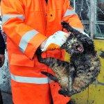 Un gato callejero rescatado del motor de un coche en Turquía inspira a los internautas http://t.co/DwT50HzxKv http://t.co/XBbl6R9FEt