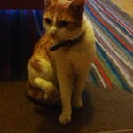 A female cat was lost on 07/12/2014 in St. Kevins Parade, #Dublin 8 http://t.co/jGM5fHYsMW #lpie http://t.co/cdHGLvXLbC
