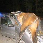 Colisiona contra un caballo que murió en el acto en Galicia. La conductora, herida leve[VÍDEO] http://t.co/PitZWiMIIc http://t.co/Ecmc1dG6Qy