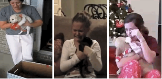 Good luck not crying: look at this compilation of people getting ...