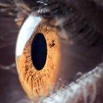 União Europeia deve aprovar tratamento com células-tronco para prevenir levar à cegueira. http://t.co/Edp7akuuQD http://t.co/0Pz3ftSaoG