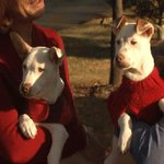 Meet Faith and Spot: 3-month-old Rat Terrier & American Pit Bull siblings: http://t.co/zrjnGMoMnE #LiveOnWLOS http://t.co/mxR6Hu2Kwn
