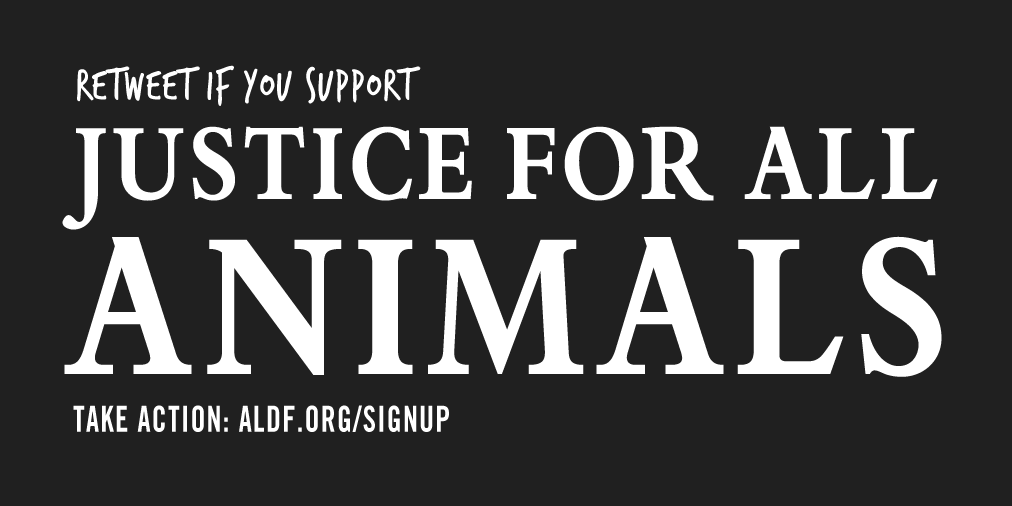 Do you support #justice for all #animals? Join @ALDF! http://t.co/yLrqUNQOFT http://t.co/XIIEk09y5V