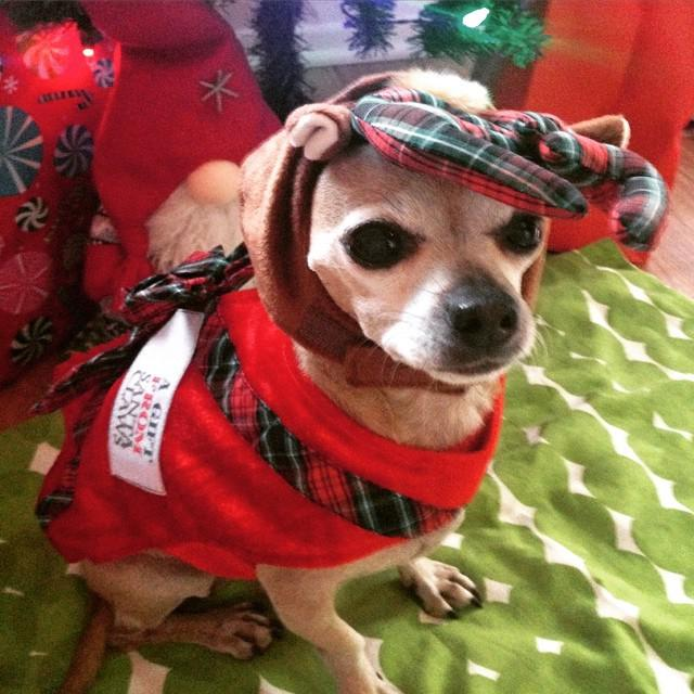 Tequila says #itsbeginningtolookalotlikechristmas! http://t.co/YNVO3itGca