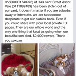Two King Charles cavaliers stolen from Ascot Vale. Keep an eye out, Melbs. Heartbreaking post: http://t.co/mhjSoadwi0 http://t.co/9zQF4MpY0U