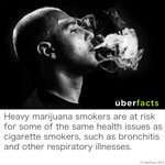 Heavy marijuana smokers are at risk for some of the same health issues as cigarette smokers... http://t.co/zQeGNNSAY8