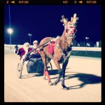 @HarnessRacingFZ Santa Claus arriving @NfldPark with a little help from @AaronMerriman #harnessracing http://t.co/Ldk9iwy2bg