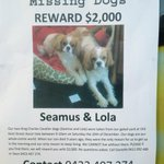 Who would steal dogs? Please read & RT to help the owners find Seamus & Lola, just reported stolen from Ascot Vale. http://t.co/x8r61g2sHL