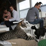 Get a coffee, a handmade bagel and maybe adopt a cat, too http://t.co/QtkF4XfVAI http://t.co/0MEjzb4WEn