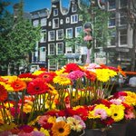 #Holanda remonta exportación flores frente a mercados emergentes como #Ecuador http://t.co/lgFnC2DOqj http://t.co/ZtFbCNPTJT