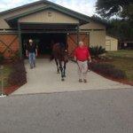 Anthonys cross at the Pleasant Acres Stallion Show. #Ocala http://t.co/wOD94sAsJC